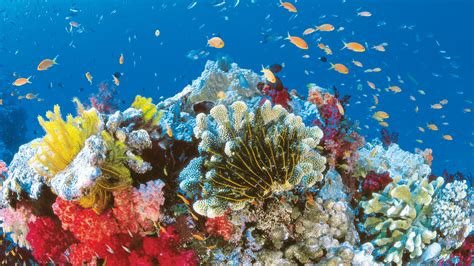 8 Great Barrier Reef HD Wallpapers   Background Images