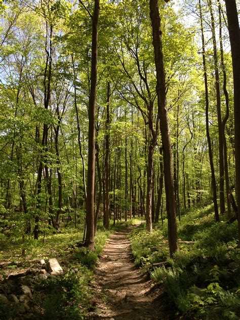 Free photo: Thick Forest - Forest, Green, Group - Free