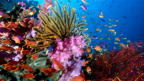 76 Sea Life HD Wallpapers   Background Images - Wallpaper