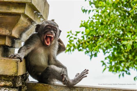 Comedy Wildlife Photography Awards – Finalisten 2020 | MDR